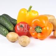 Томаты, Огурцы короткоплодные, Баклажаны, Перец салатный фото