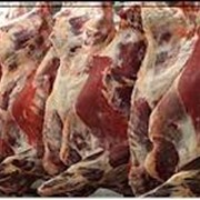 Говядина, Мясо говядина фото