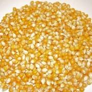Семена кукурузы от производителя, продажа, Украина фото