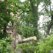 Спил деревьев частями фото