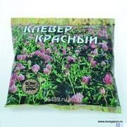 Клевер красный сорт Трубетчинский местный, 0.5 кг фото