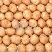 Плоды картофеля фото