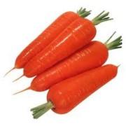 Гидролат моркови фото