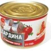 Cардина атлантическая в томатном соусе фото