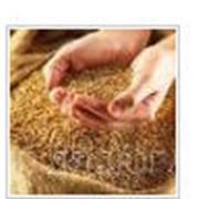 ФУМИГАЦИЯ ЗЕРНА. Заготовка, сушка, хранение семенного зерна Блок Баг Системс, ЧП фото