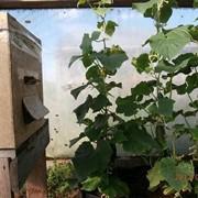 Опыление пчелами в Санкт-Петербурге и Лен. области фото