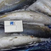 Рыба мороженая столовых сортов в ассортименте фото