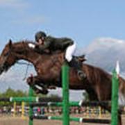 Услуги конно-спортивных клубов, ипподромов фото