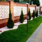 Газоны рулонные, газоны луговые, газоны спортивные, дизайн сада, фото