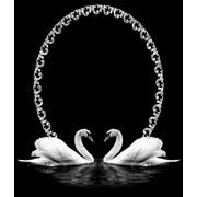 Гравировка Лебеди фото