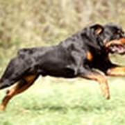 Воспитание собак фото