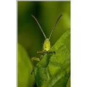 Инсектициды фото