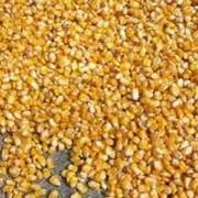 Кукуруза зерно, зерна кукурузы, зерна кукурузы оптом фото