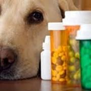 Лекарственные препараты для животных. фото