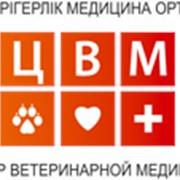 Консультации ветеринарные в Алматы фото