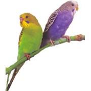 Корм для попугаев фото