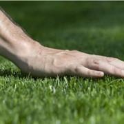 Подкормка газона ежемесячным удобрением фото