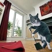 Глубокая чистка ковров и ковровых покрытий фото