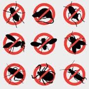 Борьба с комарами Астана, Дезинсекция в Астане фото
