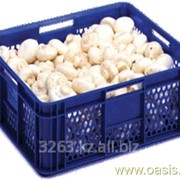 Коробка Ringoplast для овощей и фруктов 400x350x158 фото