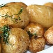 Картофель ранний Херсон, Украина фото