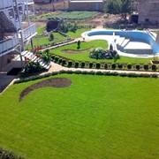 Высококачественный рулонный газон, Крым фото