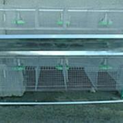 Клетка для кроликов КОП-2 откормочная пристеночная двухэтажная фото