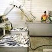 Продукция рыбная фото