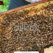 Отбор мёда из ульев для выкачки фото