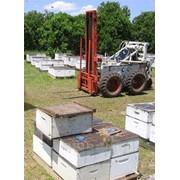 Пчелопакет фото