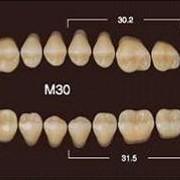 Частичный гарнитур 8шт. Жевательные нижние B1 M30 фото
