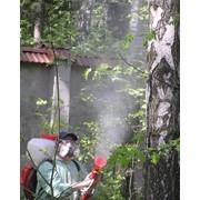 Борьба с вредителями и болезнями растений фото