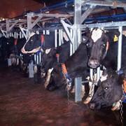 Оборудование для животноводства фото