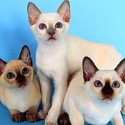 Ветеринарные средства для лечения нервной системы фото