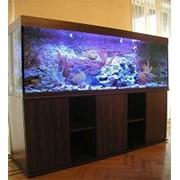 Изготовление аквариумов под заказ фото