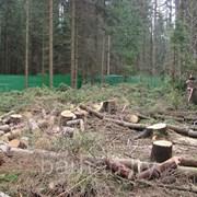 Очистка участка от деревьев,кустарников фото