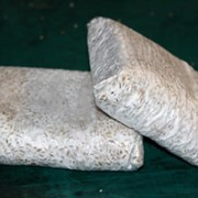 Мицелий грибов вешенки (вешенка) фото