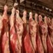 Импортер мяса фото