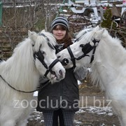 Пони в Молдове фото