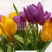 Оформление помещений живыми цветами фото