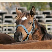 Транспортировка лошадей фото