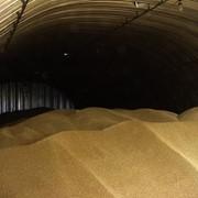 Зернохранилище из ангара фото