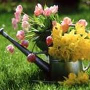 Полив цветников фото
