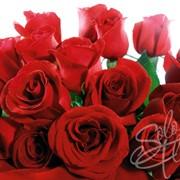 Доставка розы оптом по всей Украине фото