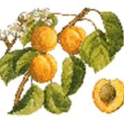 Абрикос, фруктовые кусочки (Бельгия) фото