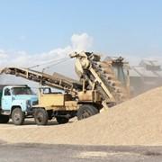 Приемка с автотранспорту зерновых культур фото