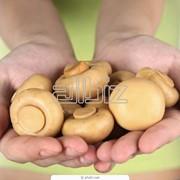 Грибы консервированные фото