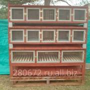 Клетки для кроликов Рекс , из мягких пород древесины. фото
