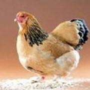 Лечение птиц фото