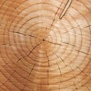 Деревянная тара, поддоны, ящики, бруски, термообработка, сушка фото